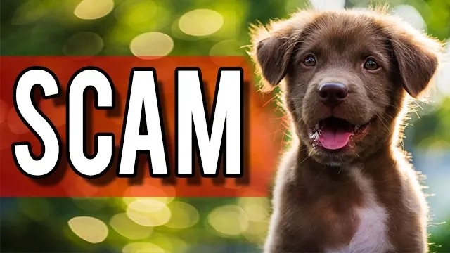 How to Avoid Puppy Scams