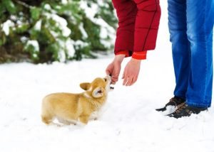 How To Exercise Your Puppy In Winter