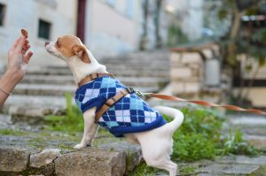 How to Socialize Your Puppy – A Complete Easy Guide