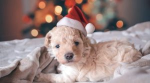 Warning Signs A Puppy Is Dying-How to Prevent, Recognize, and Treat