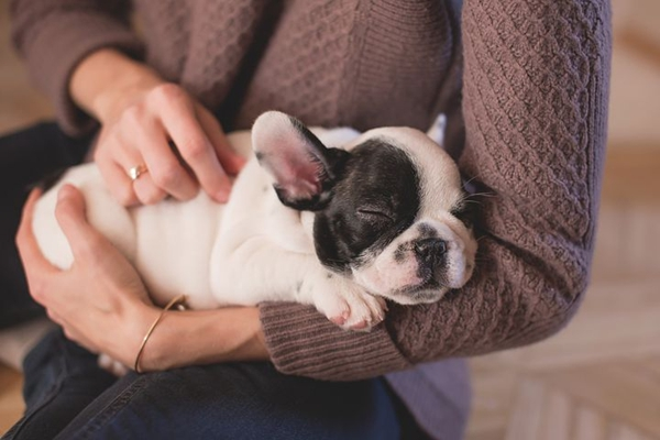 5 Tips To Be A Better Human For Your Dog-A Responsible Owner Guide