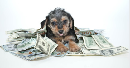 Can I Afford a Dog-money-saving tips for dog owners