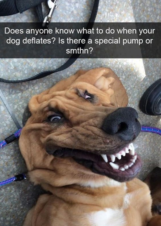 10 Funny Dog Memes That Will Keep You Laughing A Whole Day!
