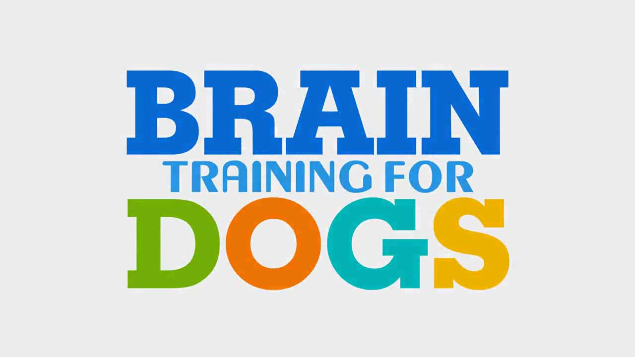 brain-training-dogs-latest-review