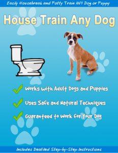 house-train-any-dog